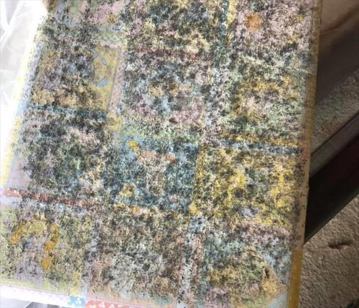 Image shows mold growth on baby photo book.