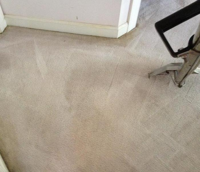 Bad Dog and Carpet Stains After