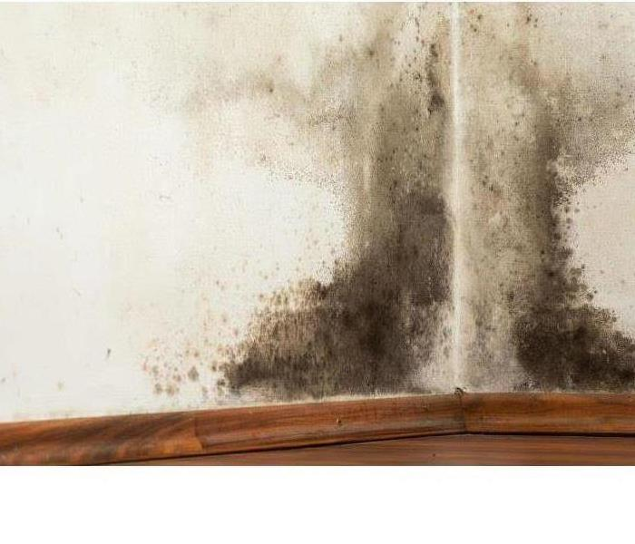 Mold Remediation What is Mold?